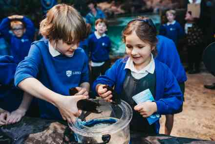 Habitats, Ecosystems and Conservation at the National SEA LIFE Centre Birmingham